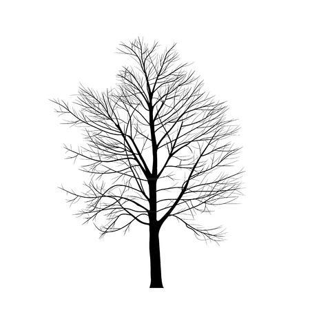 arbre automne: Les arbres avec une branche morte Illustration
