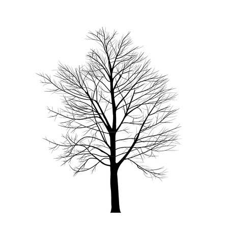 Trees with dead branch Vector