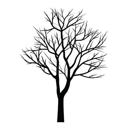 arbol alamo: �rboles con rama muerta Vectores