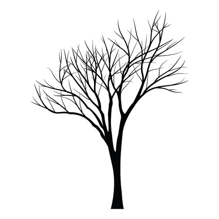 bareness: Trees with dead branch