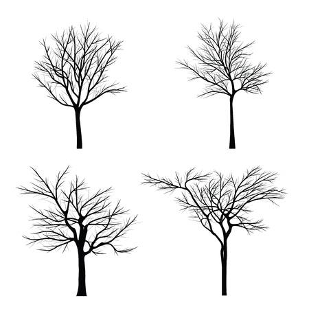 arbol alamo: Árboles con rama muerta Vectores