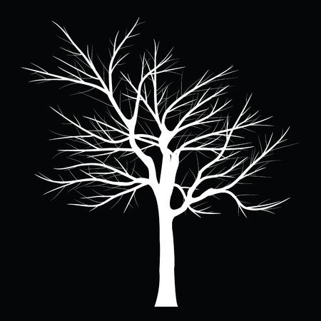 beech tree beech: Trees with dead branch