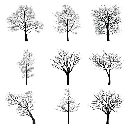 arboles blanco y negro: Árboles con rama muerta Vectores