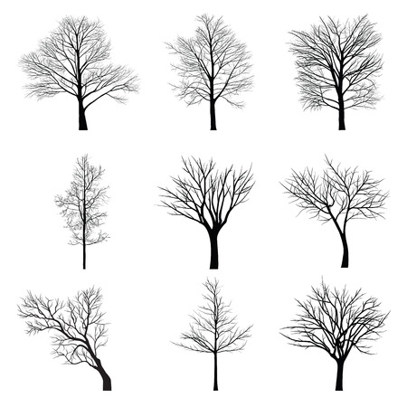 black and white image drawing: Trees with dead branch