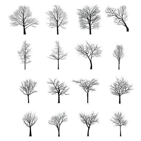 albero da frutto: Alberi con ramo morto