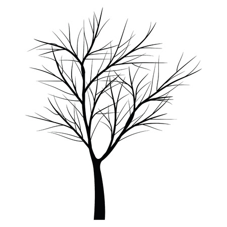 winter tree: Trees with dead branch