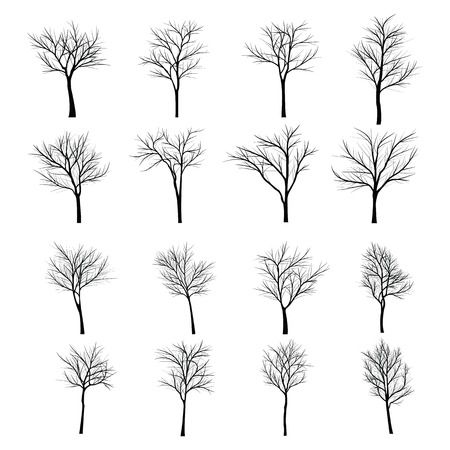 죽은 나뭇 가지와 나무 스톡 콘텐츠 - 43559384