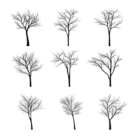 tree silhouettes: Trees with dead branch