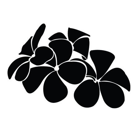 frangipani silhouettes for design vector Illustration