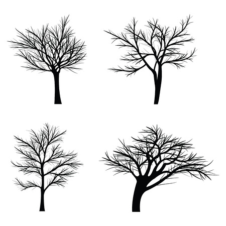 a bough: Trees with dead branches