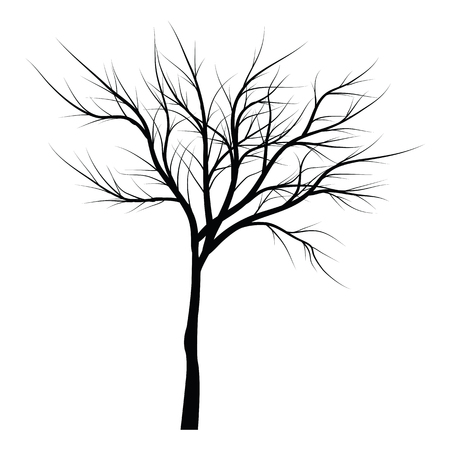 Trees with dead branches