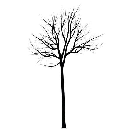 Bäume mit toten Ästen Standard-Bild - 83567519