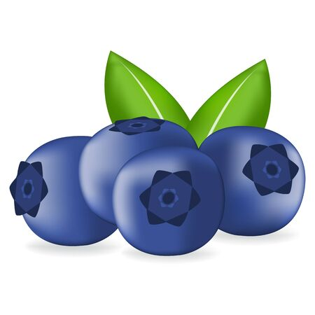 realistic fresh blueberry with leaves