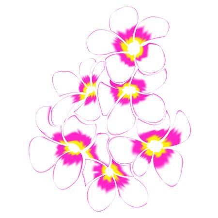 Frangipani and leaves Isolated On White Background Illustration