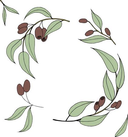 Ripe black olives on white.