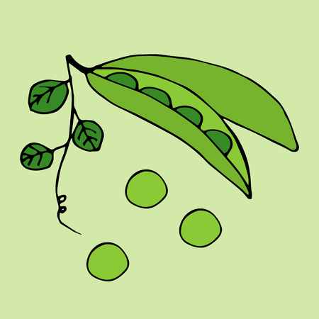 Green Peas. Vector illustration Illustration