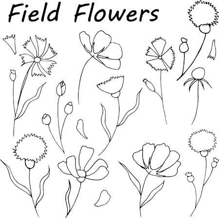Hand drawn wild hay flowers.