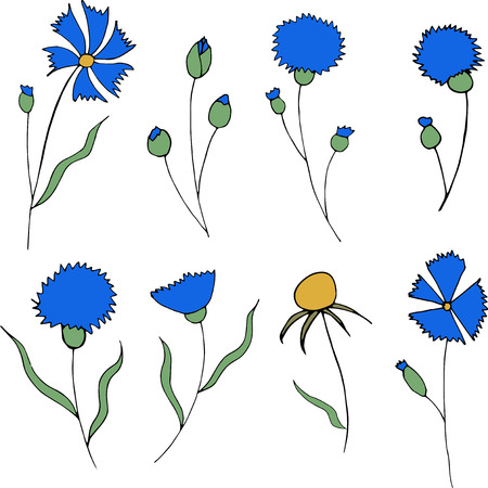 Blue cornflowers and leaves isolated on white background