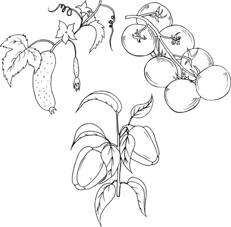 tomatoes, peppers and cucumber branch. Hand drawn illustration isolated on white background