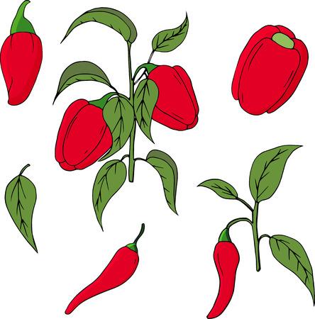Conjunto de vegetales dibujados a mano de pimiento. Vegetal aislado sobre fondo blanco. Ilustración de dibujo vectorial. Ilustración de vector