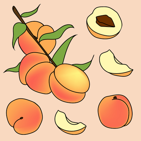 Hand drawn illustration of peach in cartoon style. Perfect for menu, card, textile, seasonal design