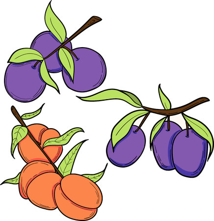 Hand drawn illustration of plum and peach in cartoon style. Perfect for menu, card, textile, seasonal design
