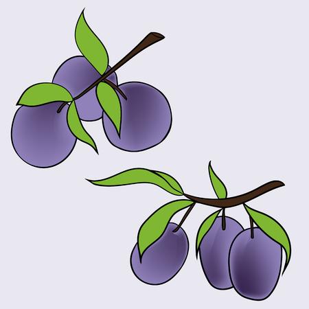 Hand drawn illustration of plum in cartoon style. Perfect for menu, card, textile, seasonal design