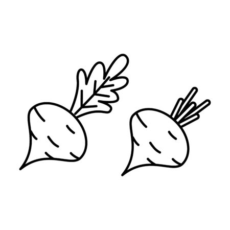 beet icons in outline style. Vector illustration for design and web. Ilustracja