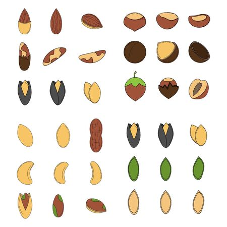 Set of nuts in cartoon style. icons for design and web isolated on white background.