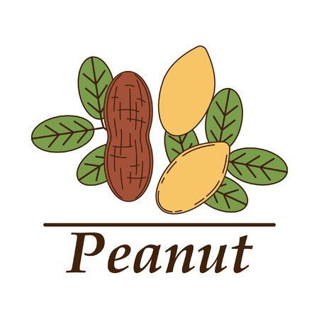 Vector peanut in cartoon style. illustration for design and web isolated on white background.