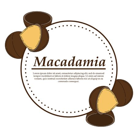 Vector macadamia in cartoon style. illustration for design and web isolated on white background.