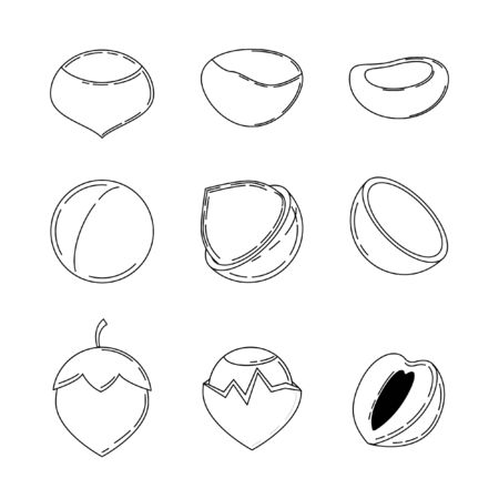Set of nuts in outline style. chestnut, macadamia and hazelnut icons for design and web isolated on white background.