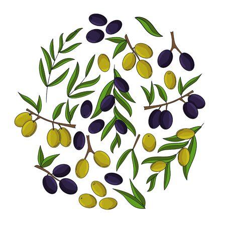 Olives card concept. Olive oil illustration for design and web, Çizim