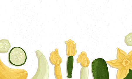 Autumn zucchini border vector cartoon illustration. Courgette with flowers horizontal banner.