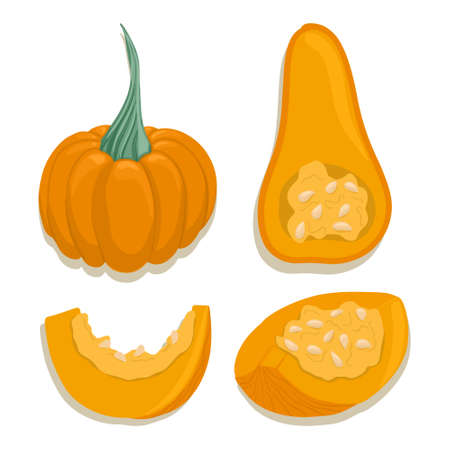 pumpkin collection in cartoon style. Bright squash vegetables isolated on white background. Healthy organic natural food and pumpkin slices with seeds for autumn farm market design.