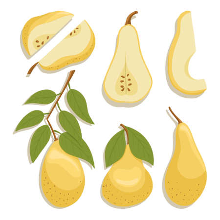pears collection in cartoon style. Bright pear fruits isolated on white background. Healthy organic natural food and pear slices with seeds for autumn farm market design. Çizim