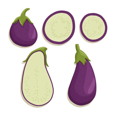 eggplant collection in cartoon style. Bright aubergine vegetables isolated on white background. Healthy organic eggplant slices for autumn farm market design.