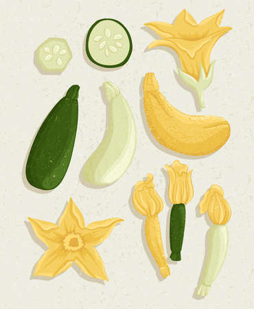 zucchini cartoon illustration with textures. Healthy organic courgettes with flowers and slices for autumn farm market design.