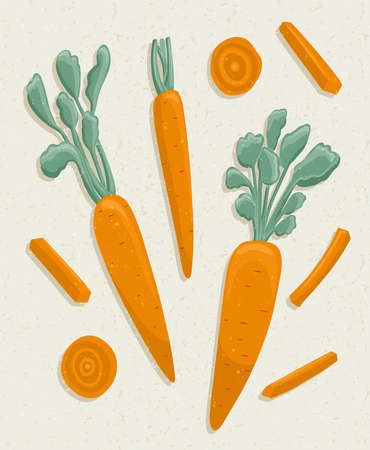 carrot cartoon illustration with textures. Healthy organic carrots with leaves and carrot slices for autumn farm market design.