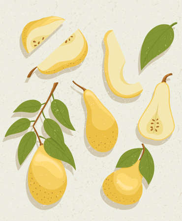 Vector pear cartoon illustration with textures. Healthy organic natural food and pear slices with seeds. Çizim