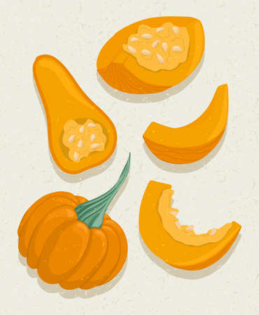 Vector pumpkin cartoon illustration with textures. Healthy organic natural food and pumpkin slices with seeds. Çizim