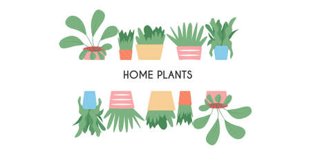 Colorful cute house plants in pots vector flat cartoon card design isolated on white background.