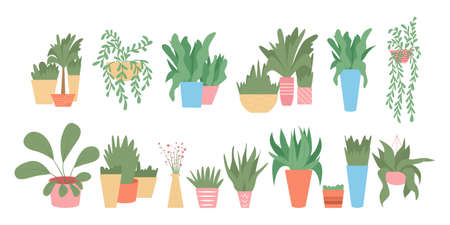 Set of colorful cute house plants in pots vector flat cartoon illustration isolated on white background. Çizim