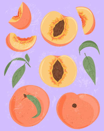 Ripe peaches, whole, sliced and half sliced peaches. Sweet nectarine fruits vector hand drawn illustration.