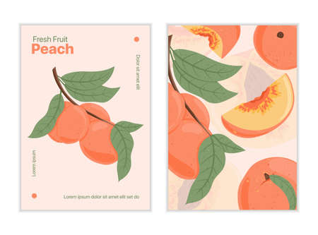 Ripe peaches, whole, sliced and half sliced peaches. Sweet nectarine fruits vector hand drawn card design.