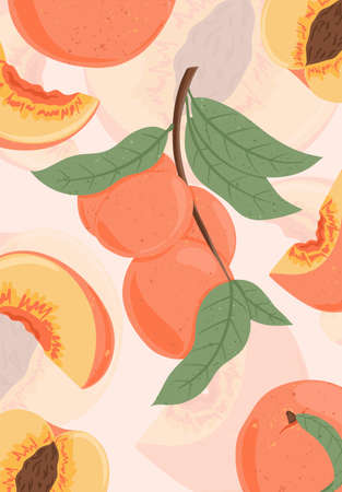 Ripe peaches on branch. Sweet nectarine fruits vector hand drawn card design. Peach seed, leaves.