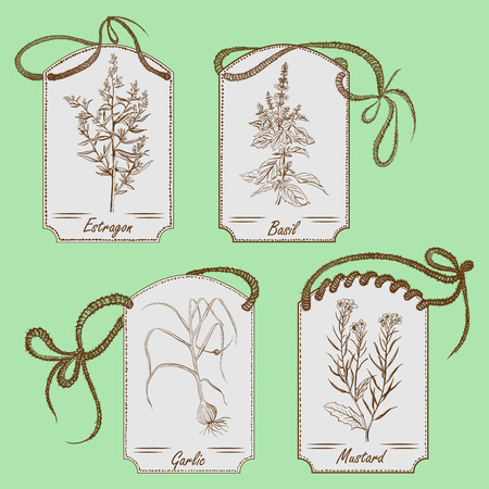 provence: Cooking herbs Illustration