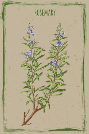 グランジ背景と新鮮な Rosemaryin のビンテージ フレーム