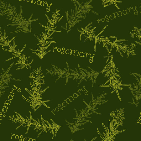 rosemary: Seamless pattern with rosemary. Illustration