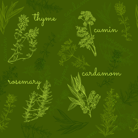 flavorings: hand-drawn herbs and spices collection seamless pattern Illustration